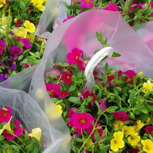 Million Bells, Hanging Baskets