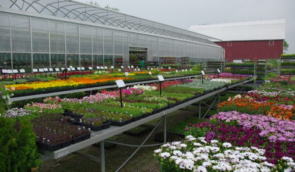 annuals and greenhouse