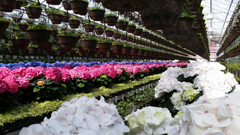 Century Garden Greenhouse